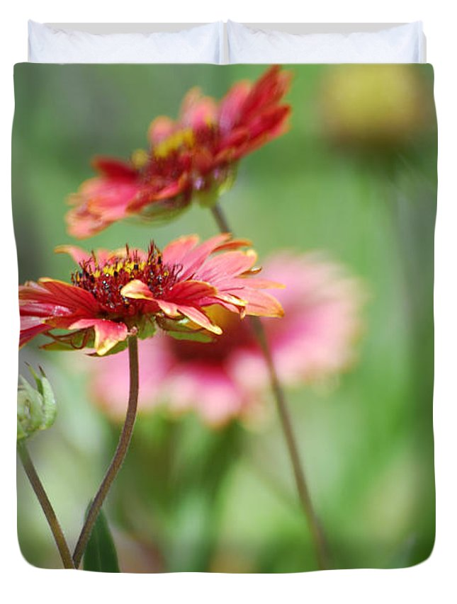 Red Daisies Duvet Cover featuring the photograph Red Daisies by Saija Lehtonen