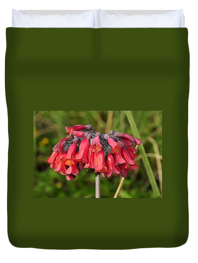 Fine Art Photography Duvet Cover featuring the photograph Red Flowers by David Lee Thompson
