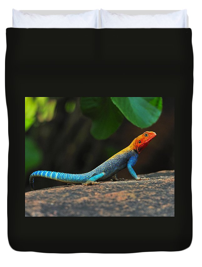 Common Agama Duvet Cover featuring the photograph Red-headed Agama by Tony Beck