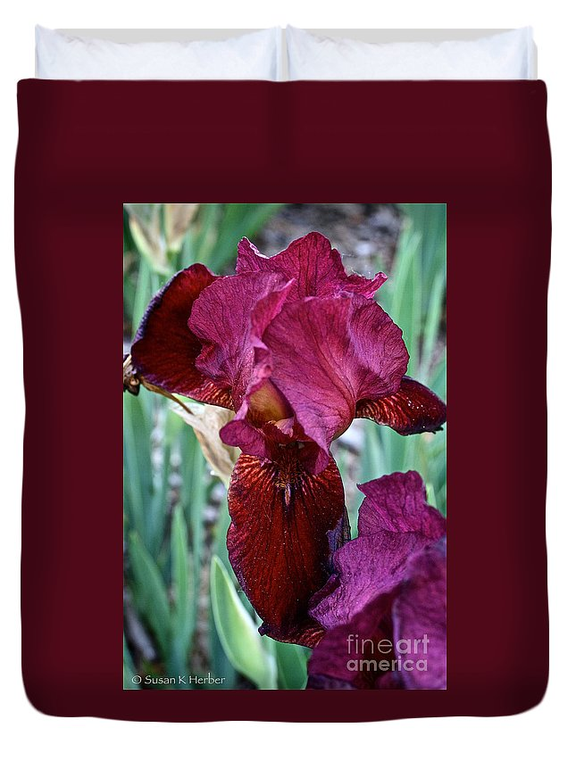 Plant Duvet Cover featuring the photograph Red Iris Duo by Susan Herber