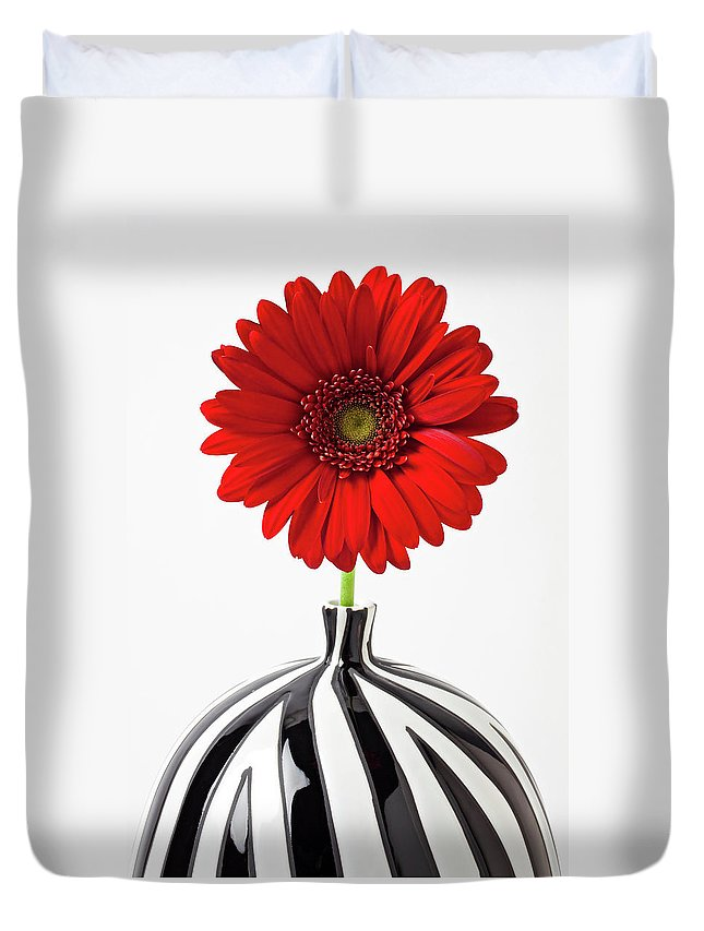 Mums Flowers Chrysanthemums Duvet Cover featuring the photograph Red Mum In Striped Vase by Garry Gay