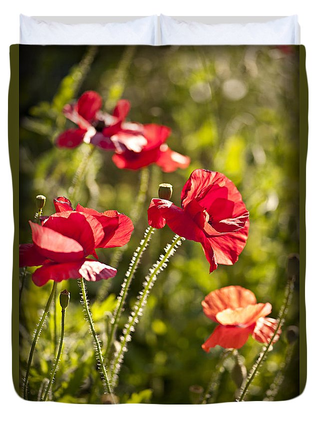 Poppies Duvet Cover featuring the photograph Red Poppies by Elena Elisseeva