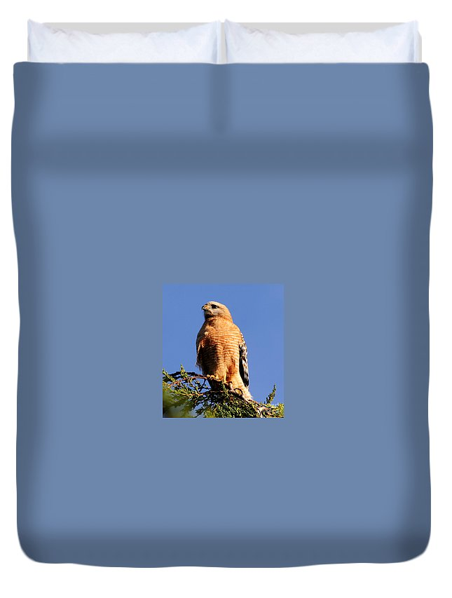 Birds Duvet Cover featuring the photograph Pismo Beach Red Shoulder Hawk by Tap On Photo