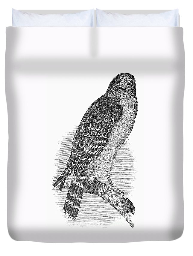 1890 Duvet Cover featuring the photograph Red-shouldered Hawk, 1890 by Granger