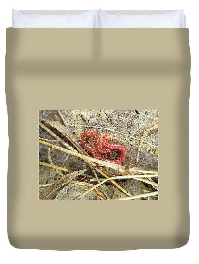 Centipede Duvet Cover featuring the photograph Red Soil Centipede - Strigamia by Mother Nature
