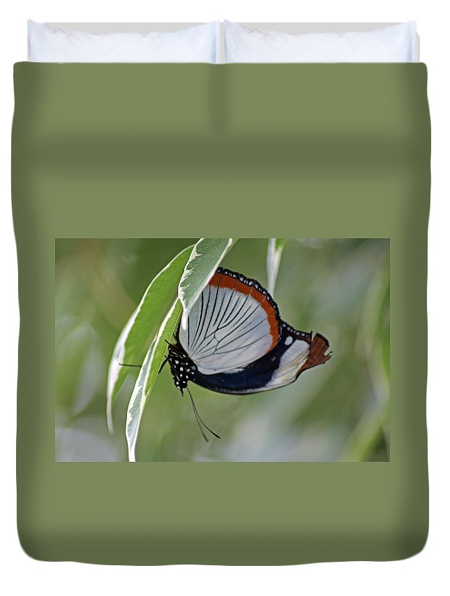 Insects Duvet Cover featuring the photograph Red Spot Diadem Butterfly by Tony Murtagh