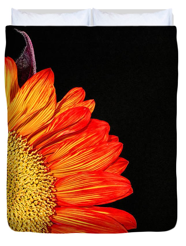 Red Sunflower Duvet Cover featuring the photograph Red Sunflower IIi by Saija Lehtonen