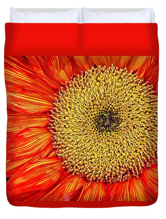 Red Sunflower Duvet Cover featuring the photograph Red Sunflower Iv by Saija Lehtonen