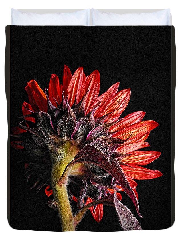 Red Sunflower Duvet Cover featuring the photograph Red Sunflower X by Saija Lehtonen