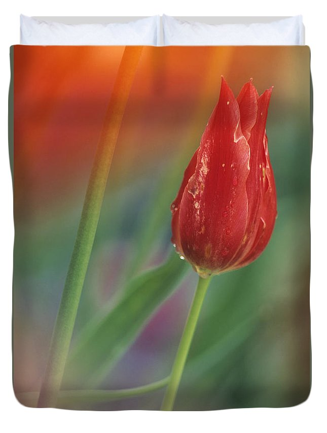 Light Duvet Cover featuring the photograph Red Tulip by Darwin Wiggett