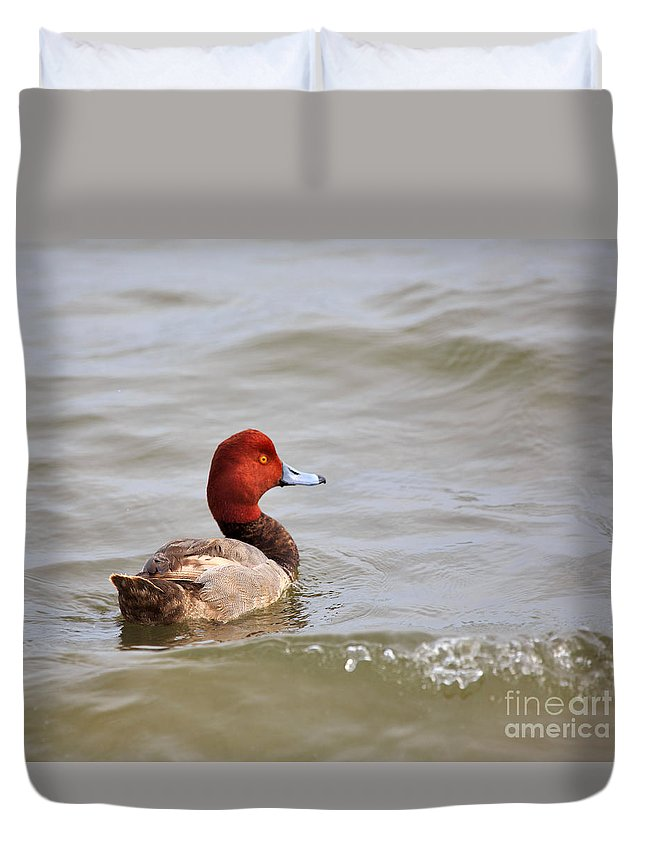 Nature Duvet Cover featuring the photograph Redhead Duck by Louise Heusinkveld