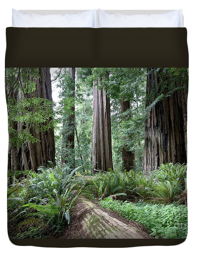 Plant Duvet Cover featuring the photograph Redwood National Park, California by Gregory G Dimijian MD