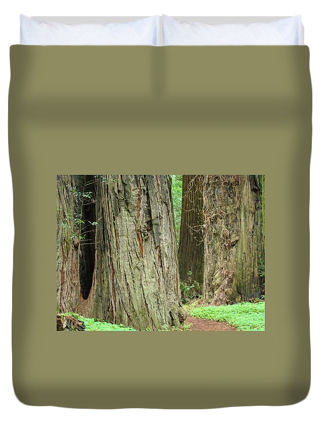 Redwood Duvet Cover featuring the photograph Redwood Trees Art Prints Big California Redwoods by Baslee Troutman