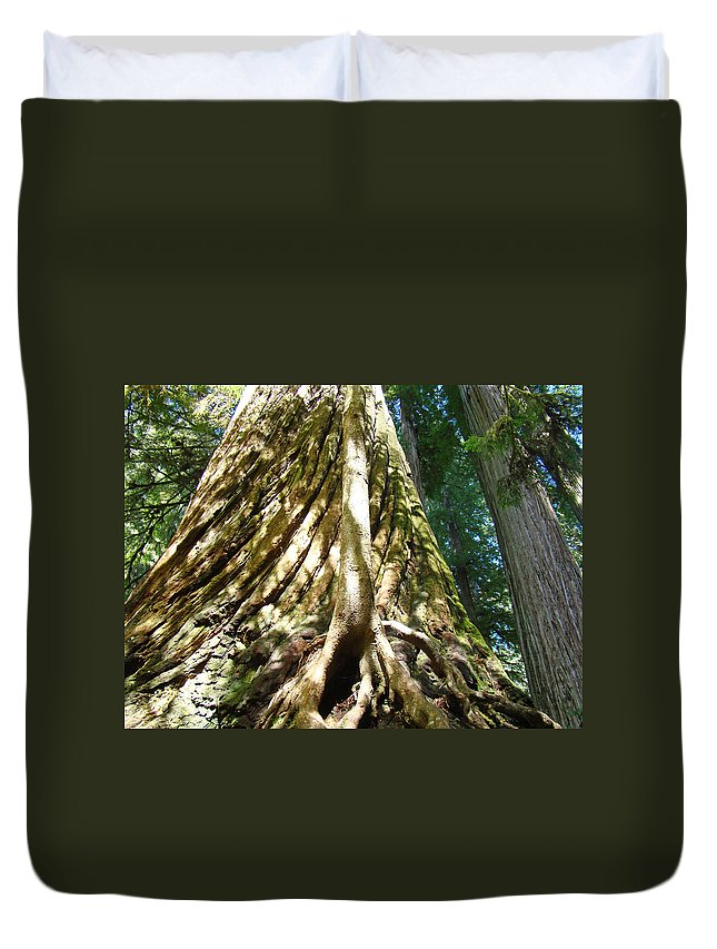 Redwood Duvet Cover featuring the photograph Redwood Trees Forest Art Prints Redwoods by Baslee Troutman