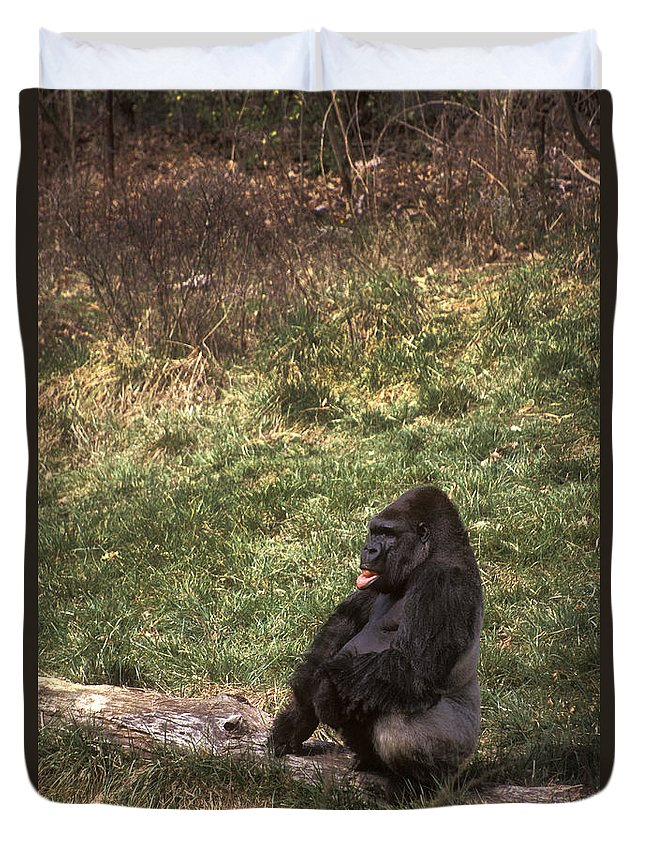 Gorilla Duvet Cover featuring the photograph Resting Silver-back by Paul W Faust - Impressions of Light