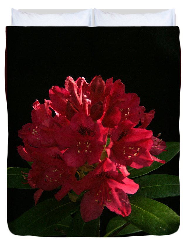 Rhododendron Duvet Cover featuring the photograph Rhododendron At Sunset 1 by Douglas Barnett