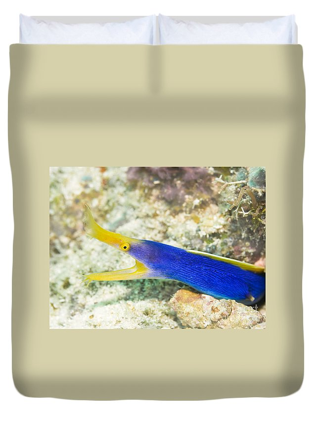 Moray Duvet Cover featuring the photograph Ribbon Moray by MotHaiBaPhoto Prints