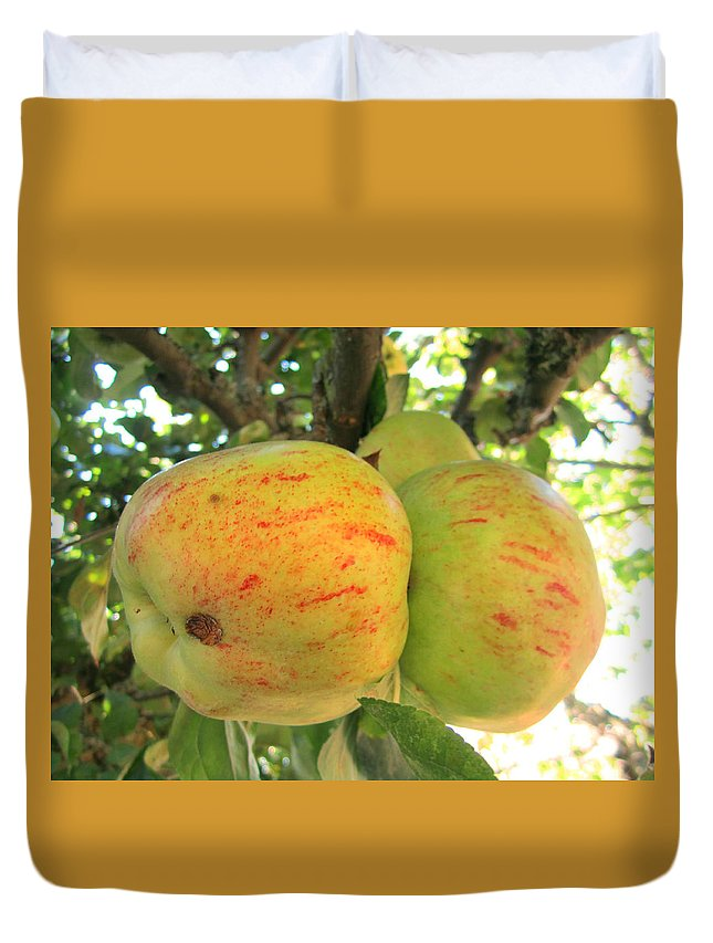 Apples Duvet Cover featuring the photograph Ripe For The Picking by Kym Backland