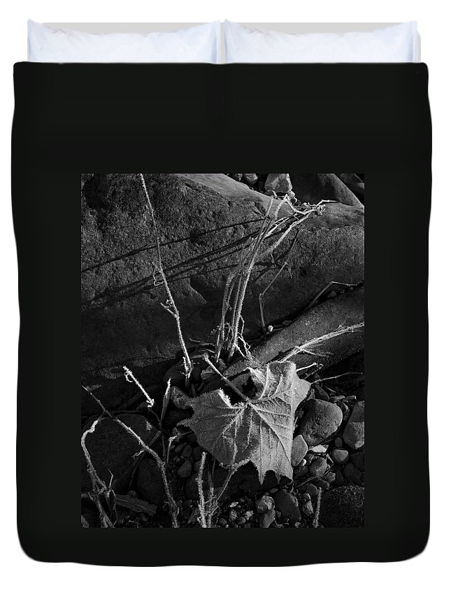 Blank And White Duvet Cover featuring the photograph River Bed Sycamore Leaf by Michael Dougherty