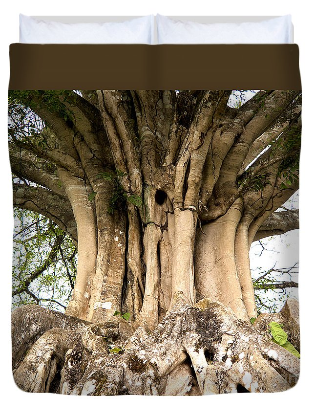Roots Duvet Cover featuring the photograph Roots by Heiko Koehrer-Wagner