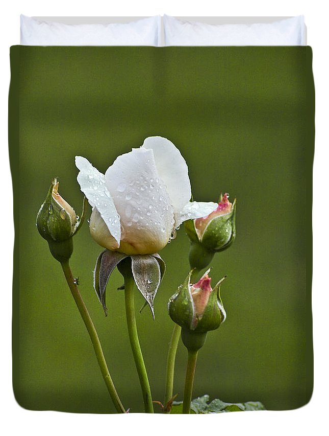 Rose Duvet Cover featuring the photograph Rose Flower Series 6 by Heiko Koehrer-Wagner