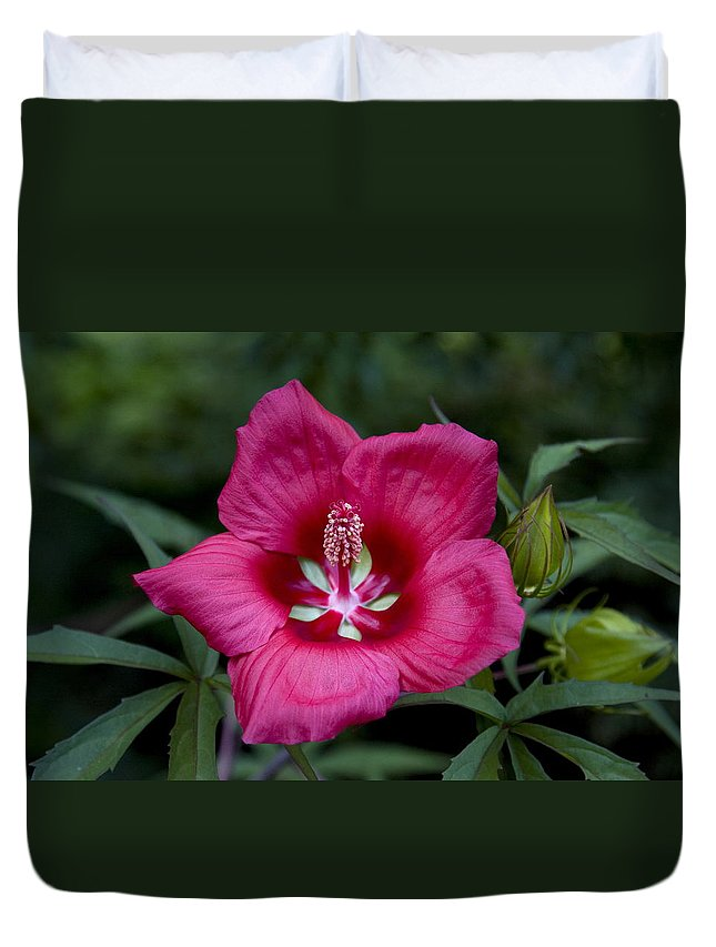 Rose Color Flower Duvet Cover featuring the photograph Rosey Blossom by Sally Weigand