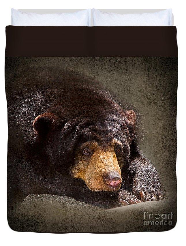 Sun Bear Duvet Cover featuring the photograph Sad Sun Bear by Louise Heusinkveld