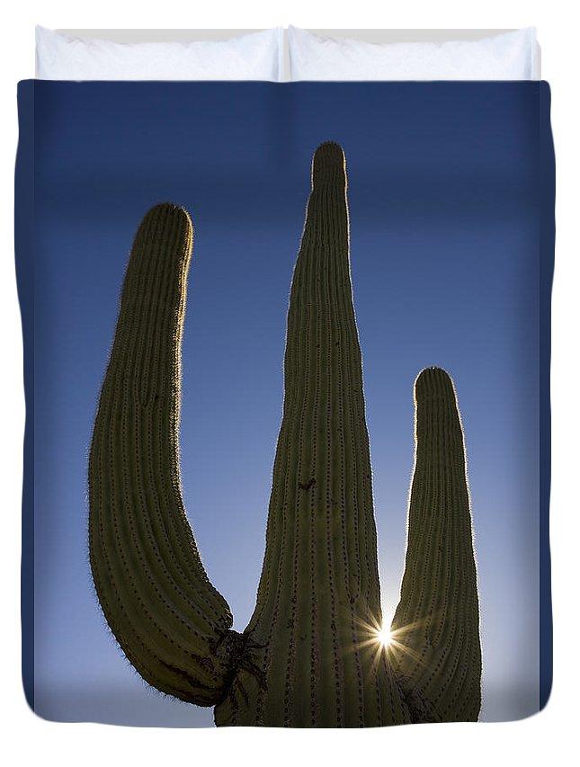 Mp Duvet Cover featuring the photograph Saguaro Carnegiea Gigantea Cactus by Ingo Arndt