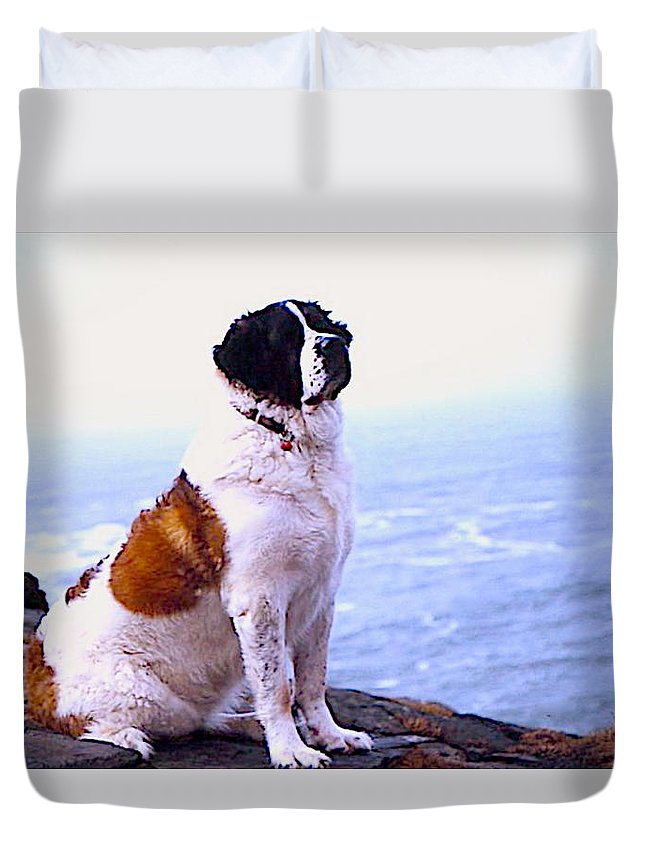 Pets Duvet Cover featuring the photograph Saint Bernard In Cornwell by David Resnikoff