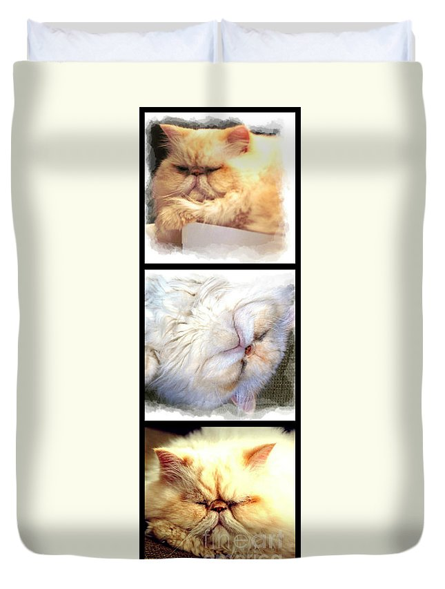 Cat Duvet Cover featuring the photograph Sam by Donna Bentley