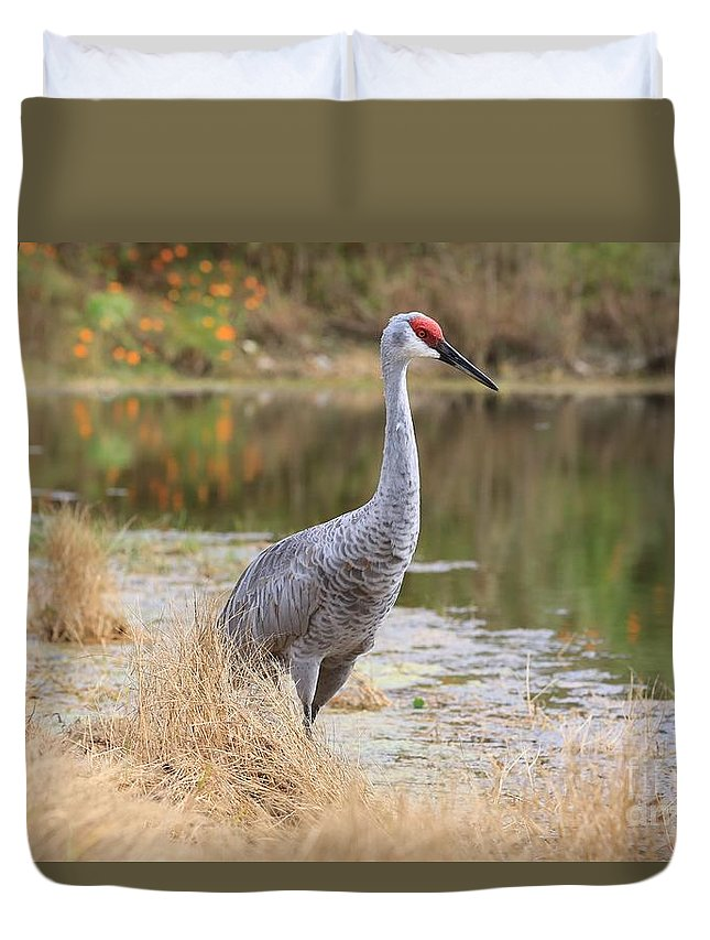 Sandhill Crane Duvet Cover featuring the photograph Sandhill Crane Beauty By The Pond by Carol Groenen