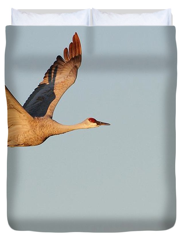 Animal Duvet Cover featuring the photograph Sandhill Crane In The Morning Light by Sabrina L Ryan