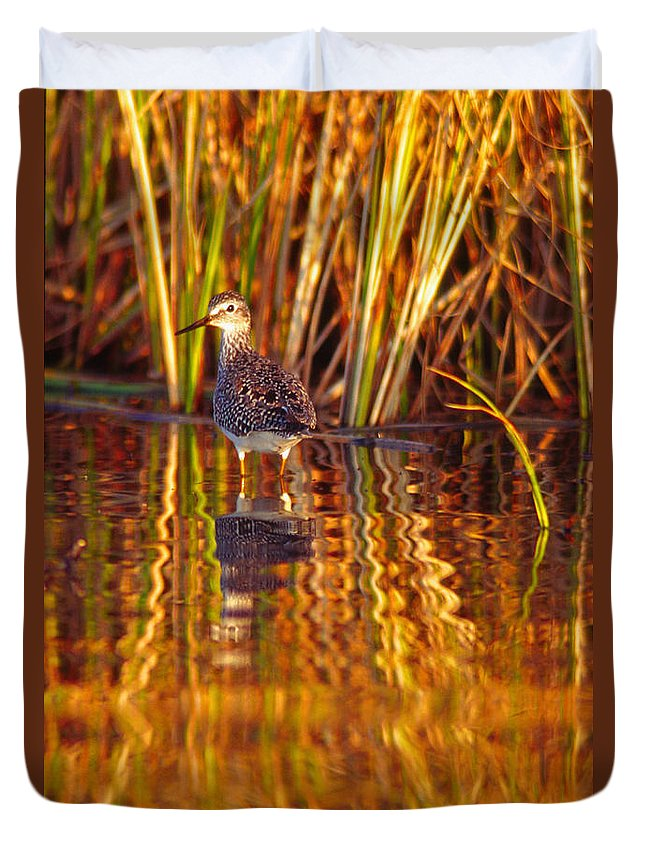 Light Duvet Cover featuring the photograph Sandpiper Wading For Food, Yukon by Robert Postma
