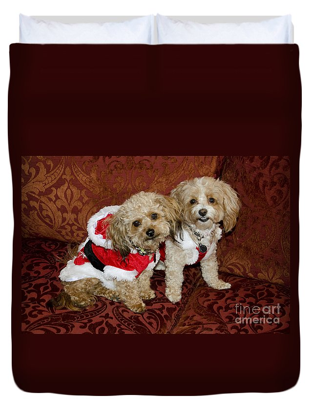 Dog Duvet Cover featuring the photograph Santa Puppies by Jim And Emily Bush