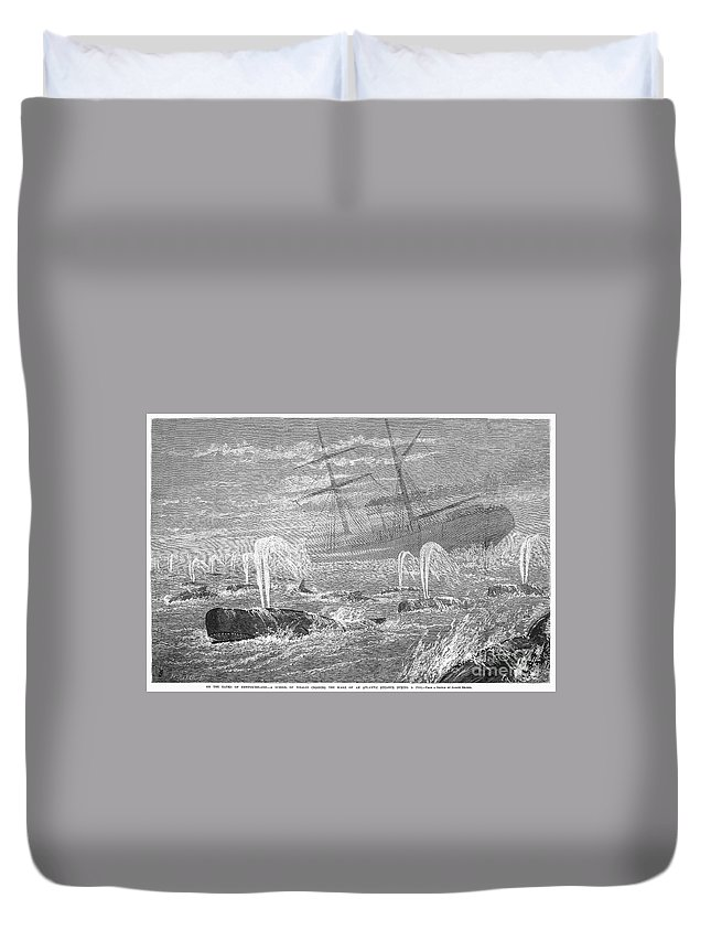 1876 Duvet Cover featuring the photograph School Of Whales, 1876 by Granger