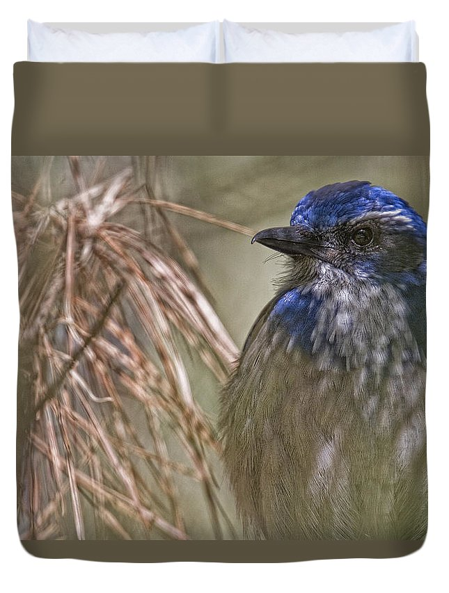 Light Duvet Cover featuring the photograph Scrub Jay by Robert Postma
