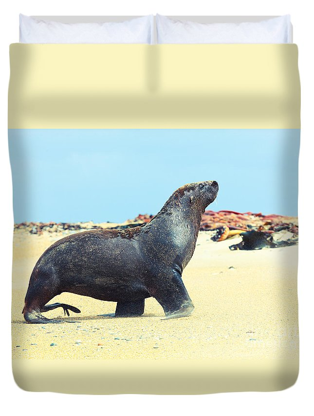 New Duvet Cover featuring the photograph Sea Lion by MotHaiBaPhoto Prints