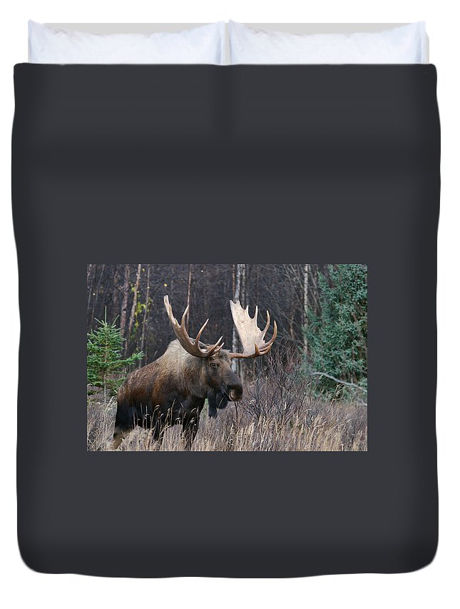 Alaska Duvet Cover featuring the photograph Searching by Doug Lloyd