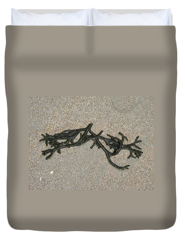 Seaweed Duvet Cover featuring the photograph Seaweed by Michele Nelson