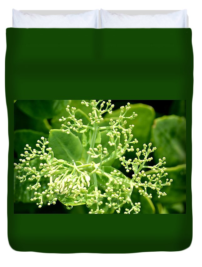 Sedum Duvet Cover featuring the photograph Sedum Droplets by Maria Urso