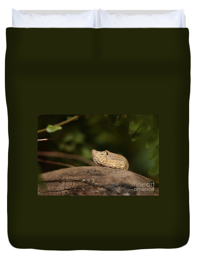 Adder Duvet Cover featuring the photograph Seeing Me Seeing You Ah Ha by Alan Look