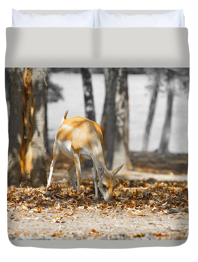 Grazing Impala Duvet Cover featuring the photograph Shaded Grazing by Douglas Barnard