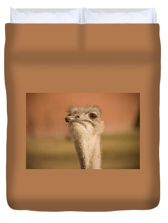 Ostrich Duvet Cover featuring the photograph Shaking My Head by Trish Tritz