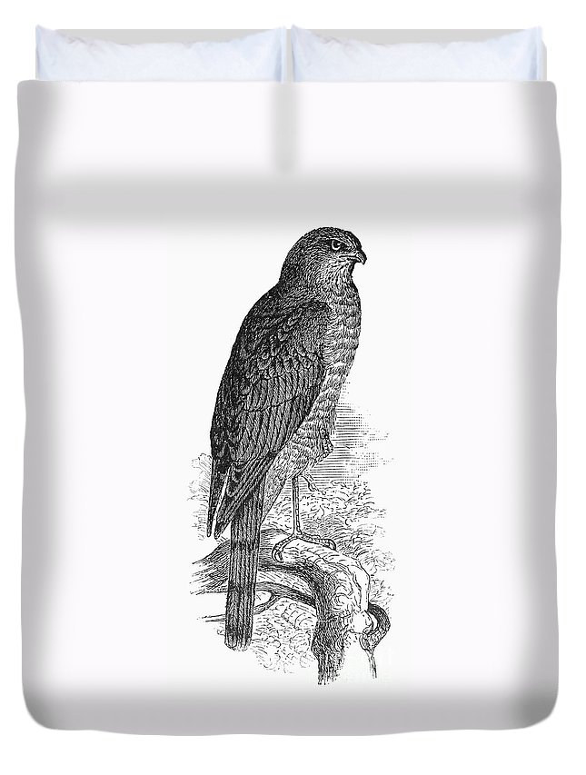 19th Century Duvet Cover featuring the photograph Sharp-shinned Hawk by Granger