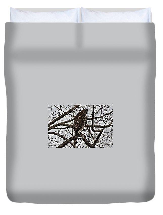 Sharp Duvet Cover featuring the photograph Sharp Shinned Hawk by Joe Faherty