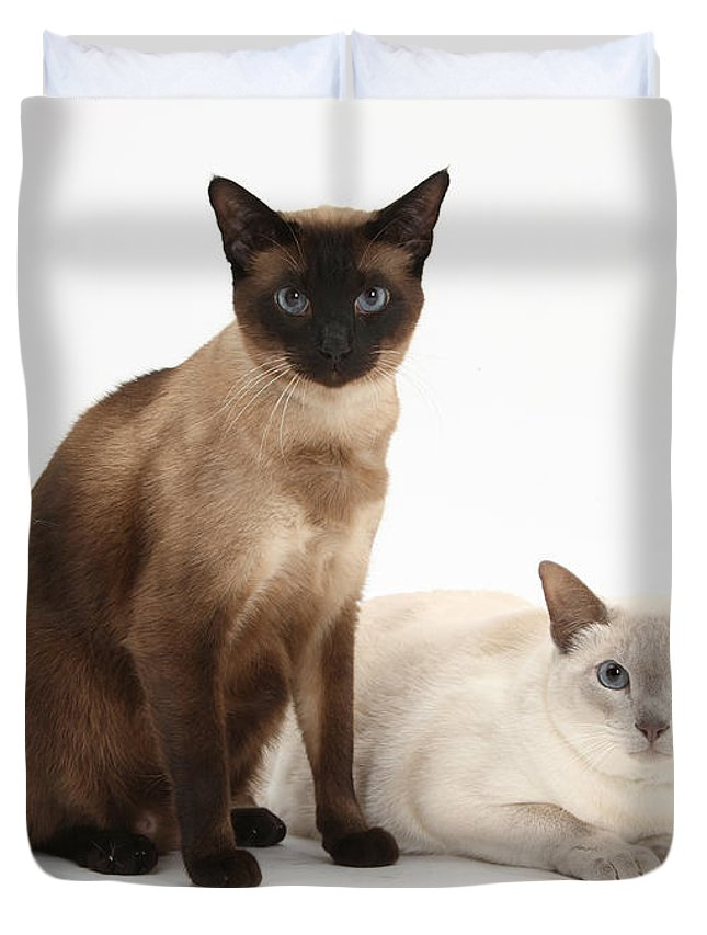 Siamese Duvet Cover featuring the photograph Siamese Cats by Mark Taylor
