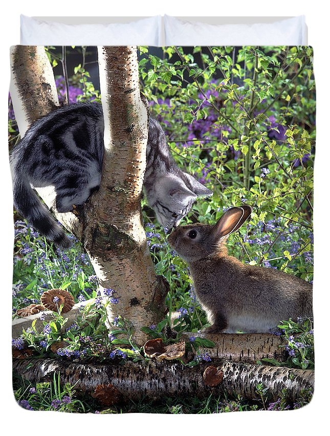 Cat Duvet Cover featuring the photograph Silver Tabby And Wild Rabbit by Jane Burton