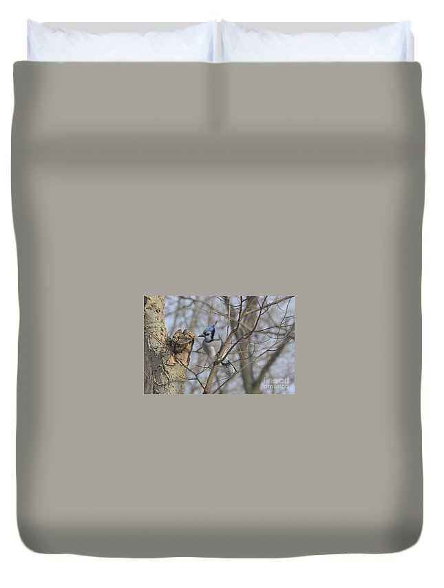 Blue Jay Duvet Cover featuring the photograph Sitting Pretty by David Arment