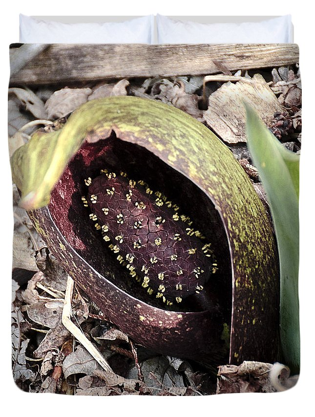 Usa Duvet Cover featuring the photograph Skunk Cabbage Baby Aka Polecat Weed by LeeAnn McLaneGoetz McLaneGoetzStudioLLCcom