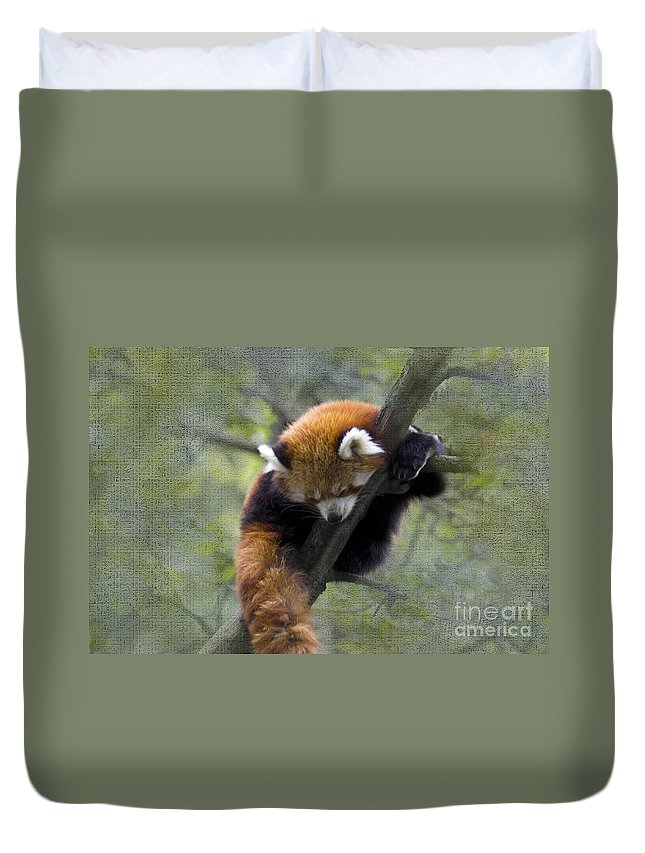 Nature Duvet Cover featuring the photograph sleeping Small Panda by Heiko Koehrer-Wagner